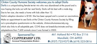 Adopt Darla