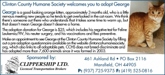 Adopt George