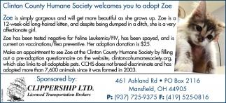 Adopt Zoe