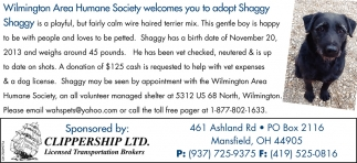 Adopt Shaggy
