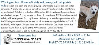 Adopt Avis