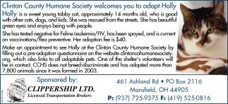 Adopt Holly