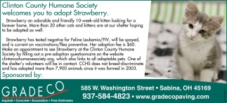 Wilmington Area Humane Society welcomes you adopt Strawberry