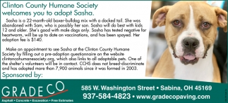 Wilmington Area Humane Society welcomes you adopt Sasha