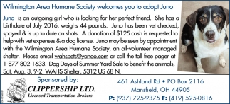 Wilmington Area Humane Society welcomes you to adopt Juno