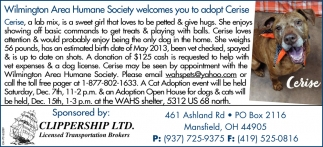 Wilmington Area Humane Society welcomes you to adopt Cerise
