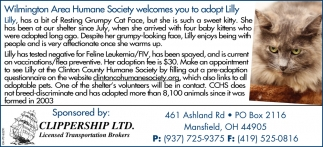 Wilmington Area Humane Society welcomes you to adopt Lilly