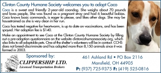 Wilmington Area Humane Society welcomes you to adopt Coco