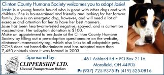Adopt Josie