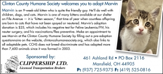 Adopt Marvin