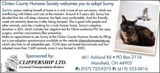 Adopt Sunny